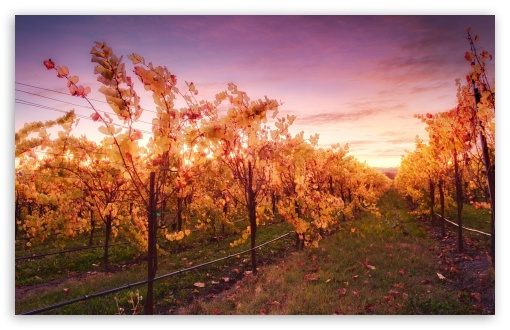 Download Sunset In The Russian River Valley UltraHD Wallpaper