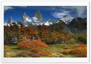 Fitzroy And Beech Trees In...