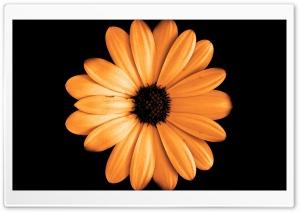 FoMef - Orange Flowerdark