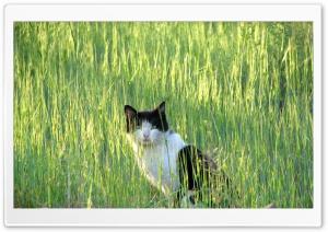 cat.MR