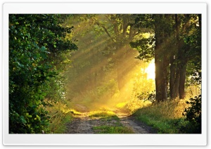 Sunny Morning, Forest Path
