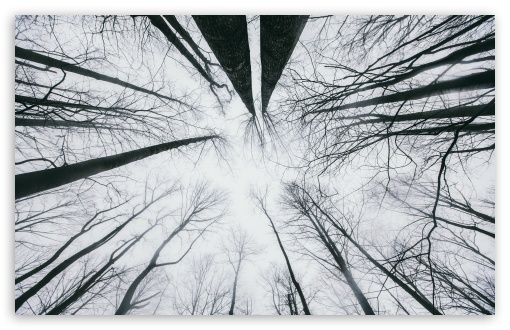 Download Looking Up at the Sky through Trees UltraHD Wallpaper