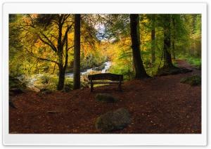 Bench, Forest, Autumn