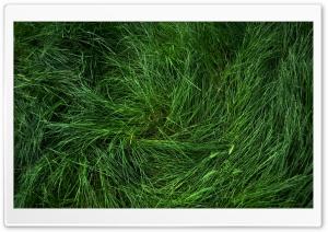 Flattened Grass
