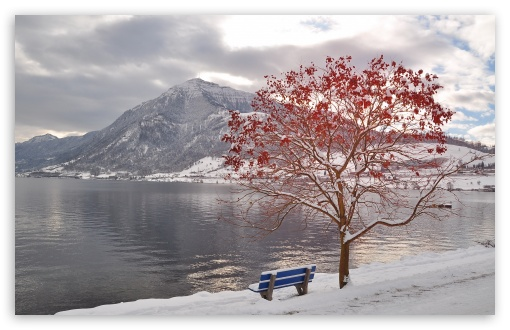 Download Bench By The Lake UltraHD Wallpaper