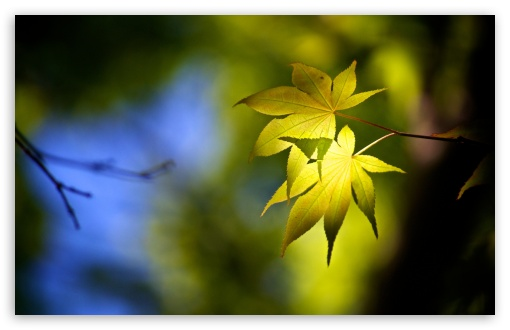 Download Forest Leaves UltraHD Wallpaper