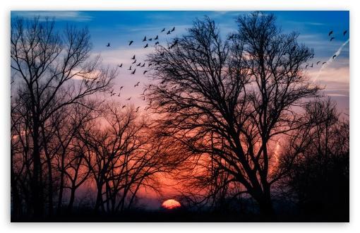 Download Beautiful Sunrise UltraHD Wallpaper