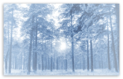 Download White Forest UltraHD Wallpaper