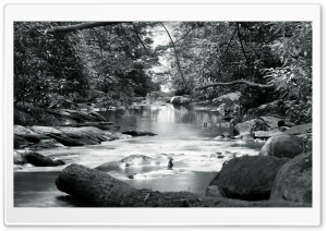Forest Stream Black And White