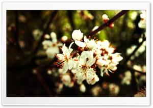Spring Flowers Bundle