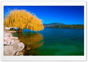 Beautiful Willow