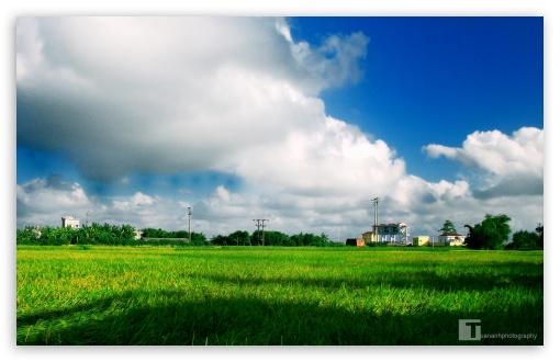 Download Green Field UltraHD Wallpaper