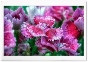 Pink Flower Macro Leaves