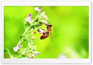 Honey Bee, Bright Green...