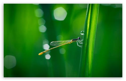 Download Dragonfly, Green Grass, Macro UltraHD Wallpaper