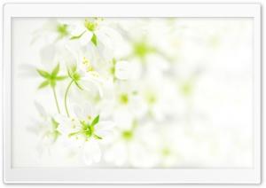 Blurred White Flowers