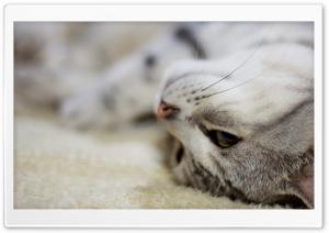 Bum Cat