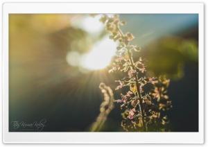 Sun Glares
