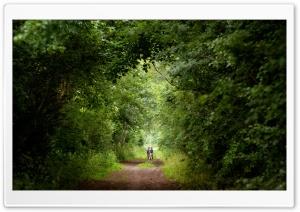 Tree Tunnel, Summer