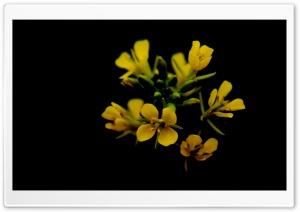 Flower In Black
