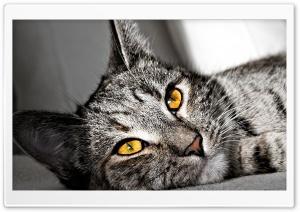 Cat Portrait