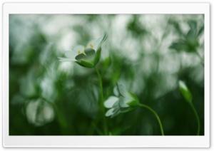 White Small Flower, Blur
