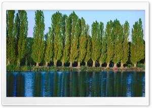 Poplar Trees Near Lake