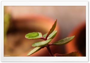Leaf Bearing Water