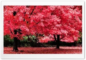 Pink Autumn Foliage
