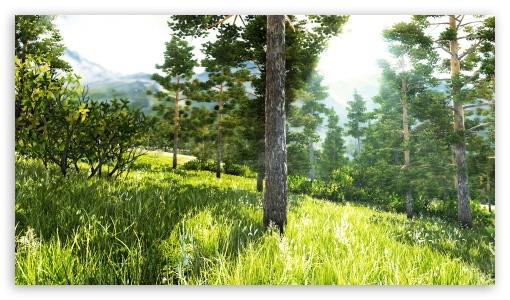 Download Beautiful Forest UltraHD Wallpaper