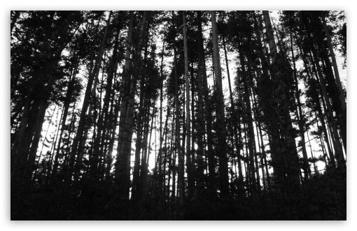 Download Black & White Trees UltraHD Wallpaper
