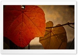 Rust Colored Leaf