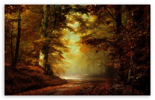 Download Beautiful Autumn Landscape UltraHD Wallpaper