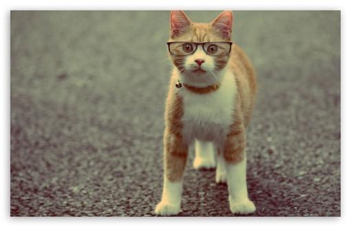Download Geek Cat UltraHD Wallpaper