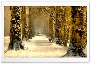 Beautiful Tree Alley, Winter