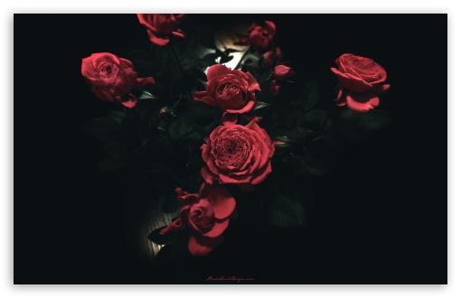 Download Dark Roses UltraHD Wallpaper