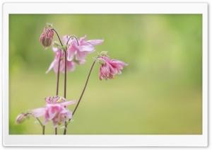 Pink Flowers, Light Green...