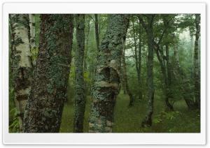 Trees Dual Monitor