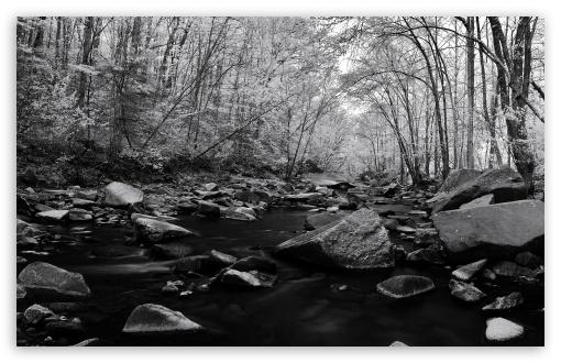 Download Pohick Creek Black And White UltraHD Wallpaper