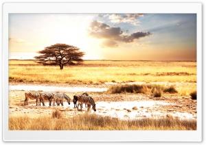 Zebras, Savanna