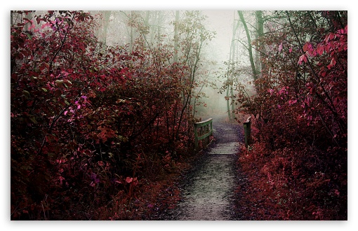 Download Autumn Mist Path UltraHD Wallpaper