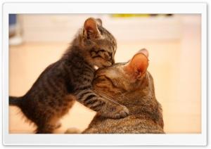 Tender Moment Between A Cat...