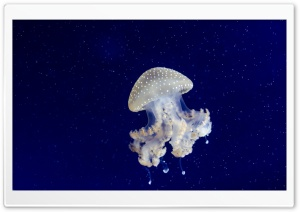 Floating Bell Jellyfish