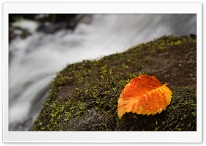 Wet Leaf And Moss
