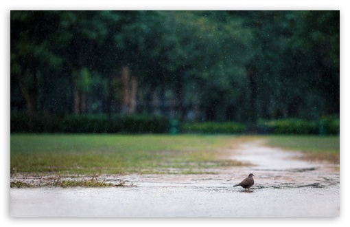 Download Bird in the Rain UltraHD Wallpaper