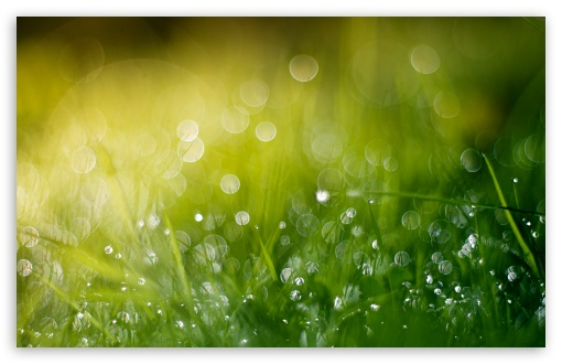 Download Wet Grass Bokeh, Summer UltraHD Wallpaper