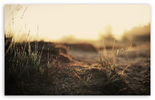 Download Dirt And Wet Grass UltraHD Wallpaper