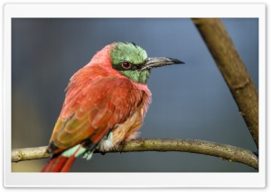 A Perched Bee Eater