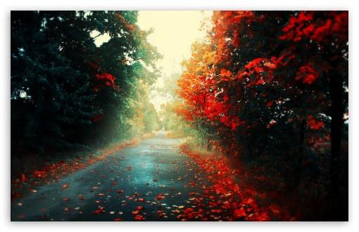 Download Red Trees UltraHD Wallpaper