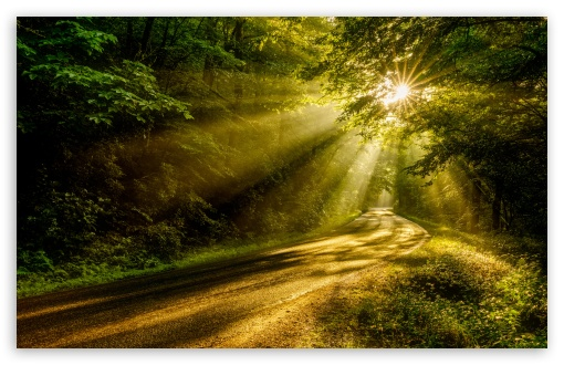 Download Sun Rays through the Forest Trees, Road UltraHD Wallpaper